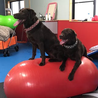 K9 Care Space DogHeart