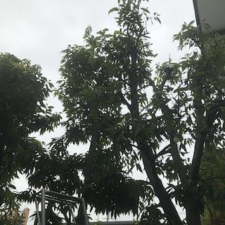 kayagreen