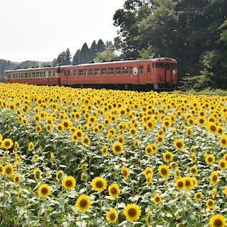 Photo Works 菊地利雄