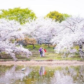 Under The Tree photography  フォトグラファー カナメ