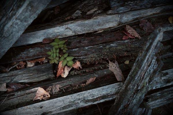 板金内部の木材の腐食