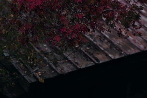 屋根の板金の劣化症状