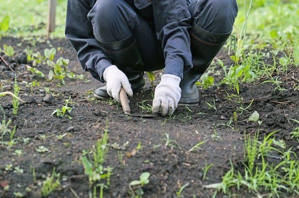 除草剤だけで雑草を駆除するのは難しい