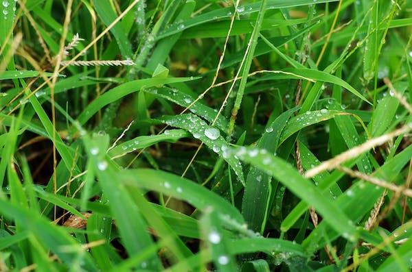 雨の日に除草剤を使って効果があるの?