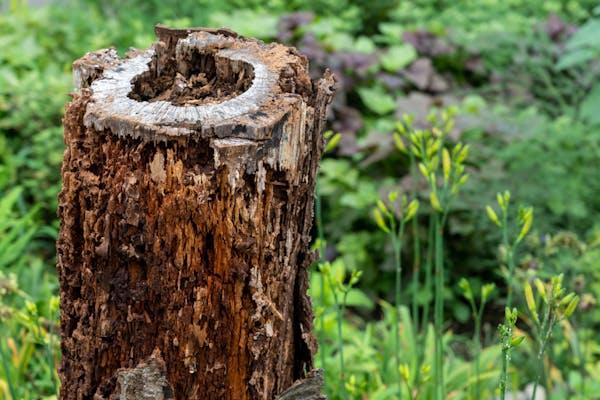 木を枯らす際の注意点