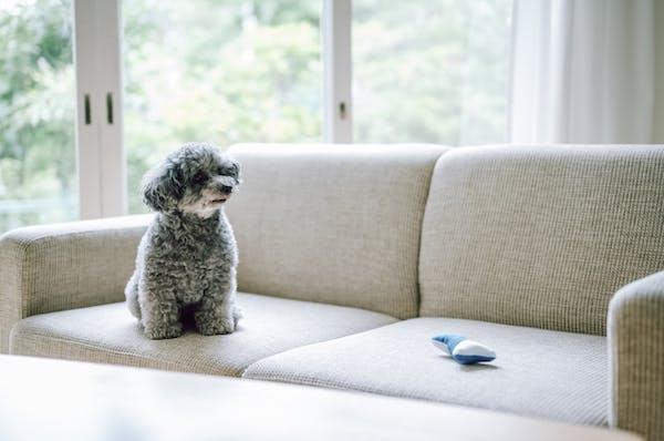 犬が座っているソファ