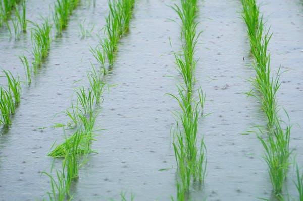 除草剤を雨の日に撒く際の注意点5つ