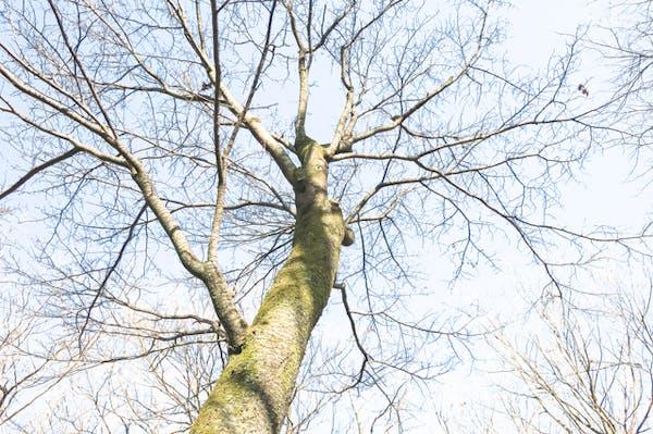 除草剤で木を枯らす方法