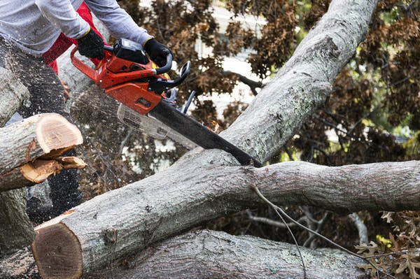 木の伐採を業者に依頼しよう