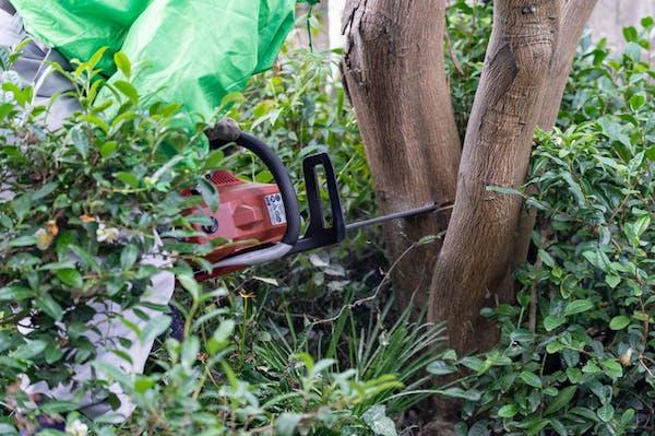 巻き枯らしで木を枯らす方法