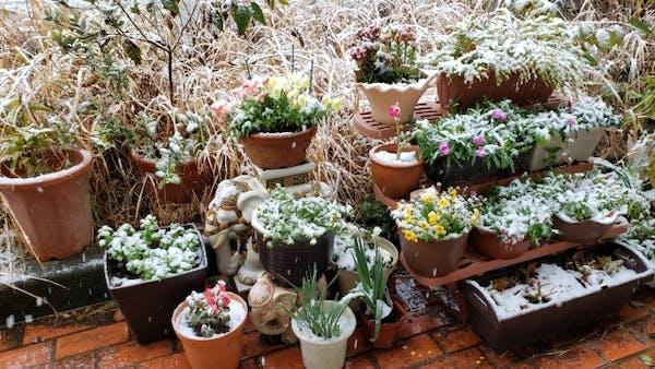 屋根の下にある物品や植物を守る