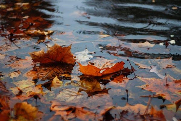 排水溝に詰まる恐れのある落ち葉