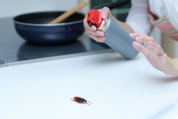 キッチンに現れたゴキブリを殺虫剤で撃退する主婦