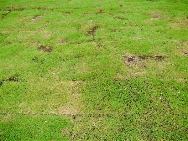 少し荒れた芝生