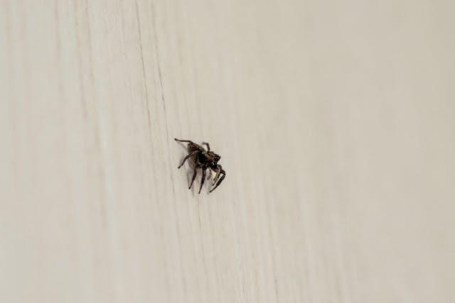 蟻 駆除 小さい 屋外のアリを駆除する方法: 11