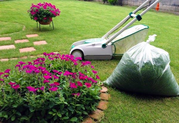 整備された芝生