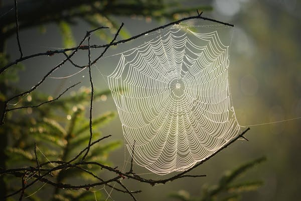 木の枝に張られた蜘蛛の巣
