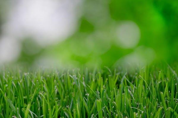伸びてしまった雑草