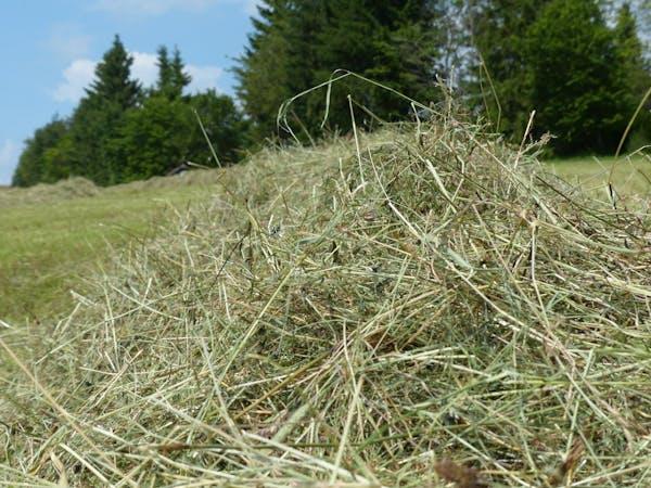 刈り取った草の山
