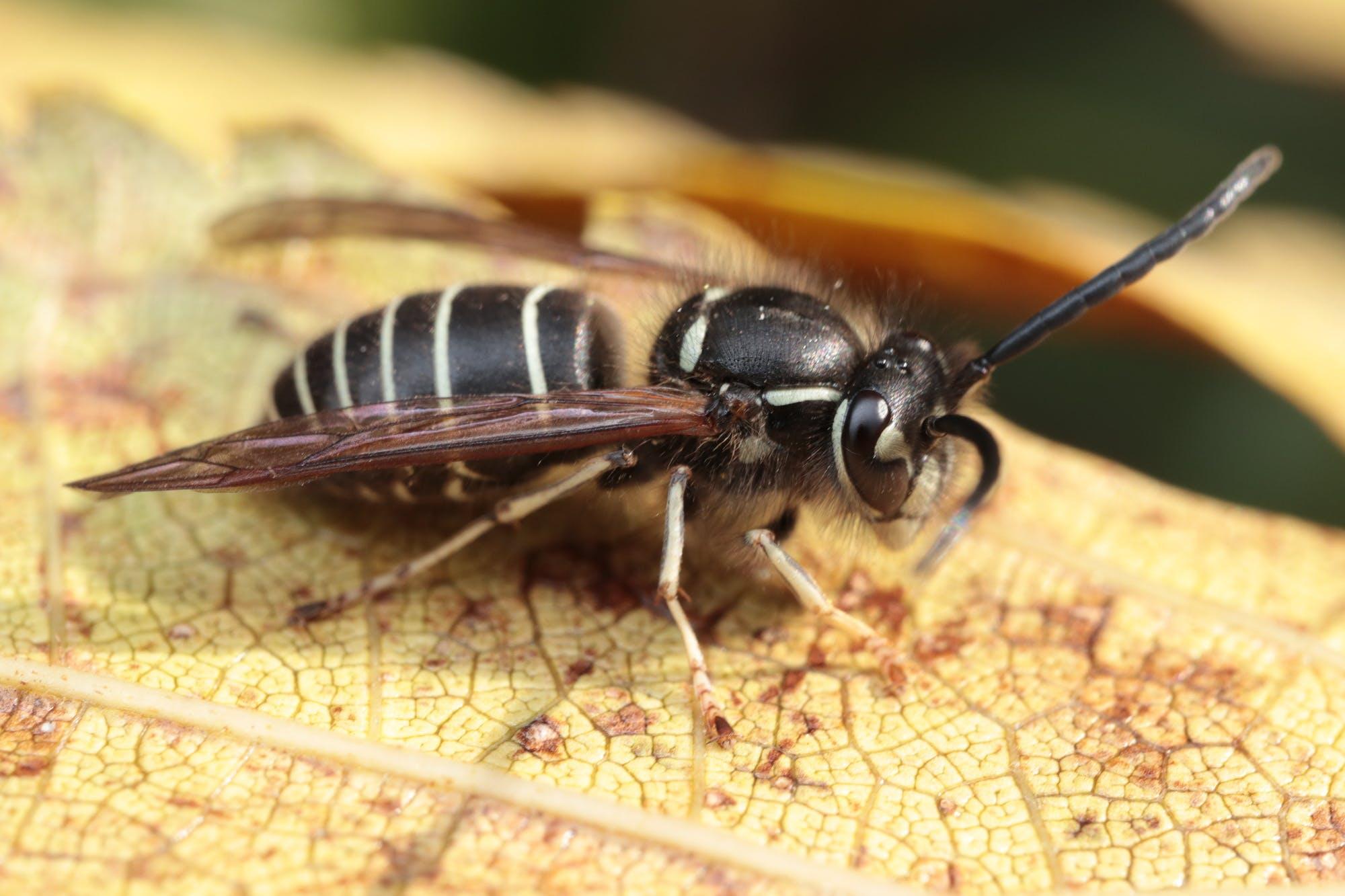 アブ 虫刺され アブ(虻)の生態や刺された時の症状と対策について