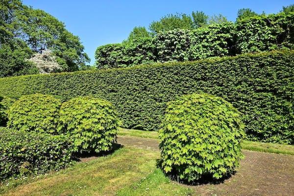 剪定された庭