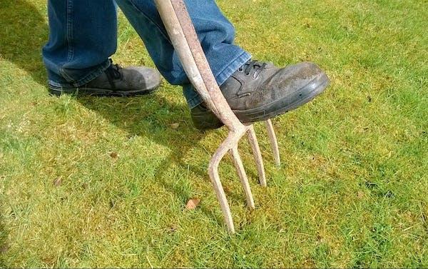 芝生にキノコを生えなくする方法