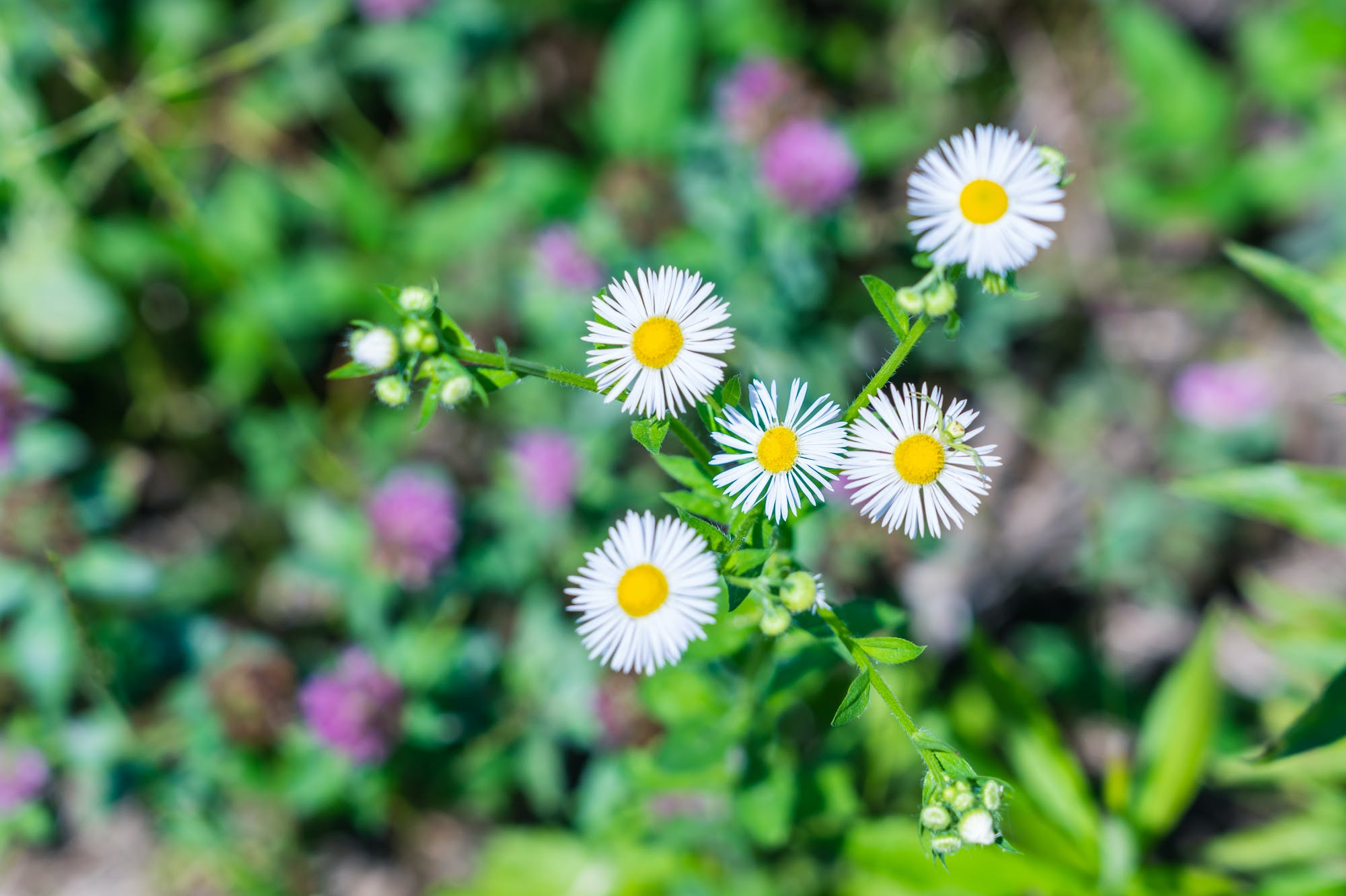 名前 花 を 調べる アプリ の 花の名前を調べるには?無料アプリ「GreenSnap」を使ってみました!