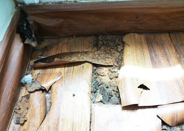 シロアリ被害の床