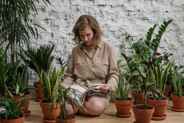 植物について調べる人