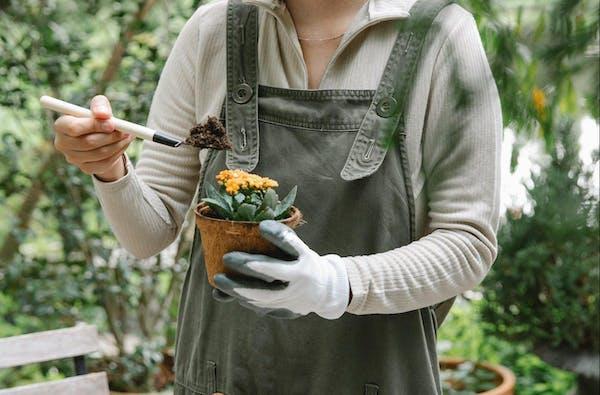 植木鉢を手に持つ人