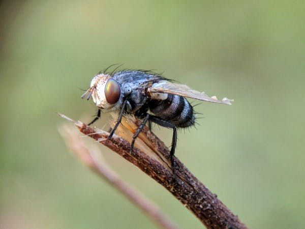 羽アリに似た虫