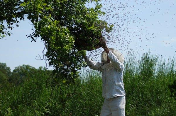 蜂の巣駆除のプロ