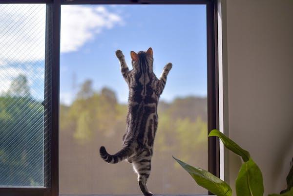 網戸にのぼる猫