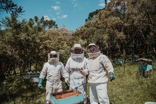 蜂の巣駆除業者