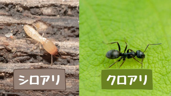 黒 蟻 羽 アリ 大量 発生