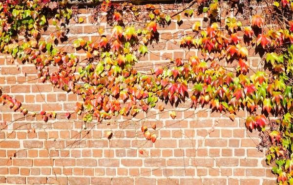 壁を這うつる植物