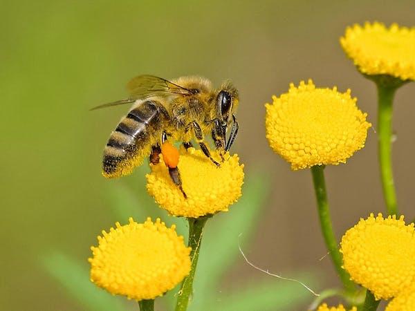 ミツバチに関するQ&A