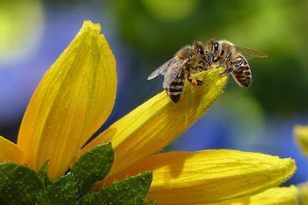 ミツバチの生態