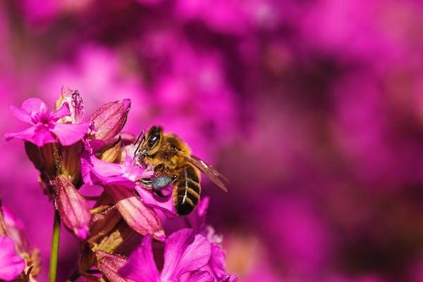 ミツバチの仕事