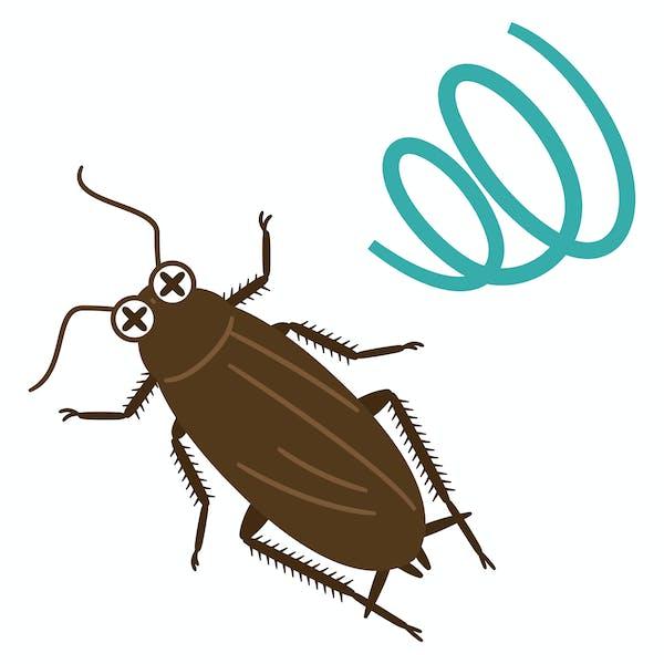瀕死のゴキブリのイラスト