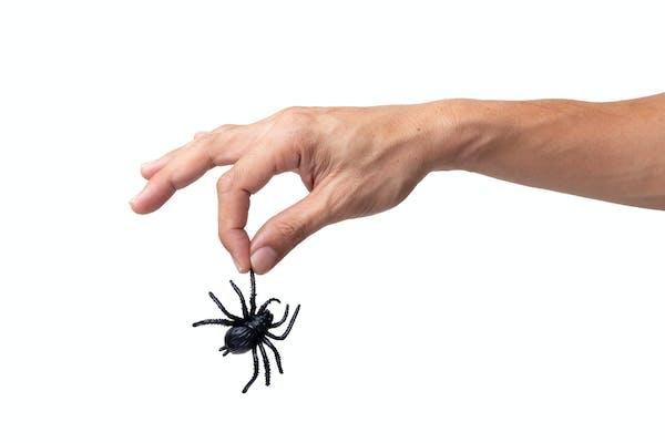 クモをつかむ人の手