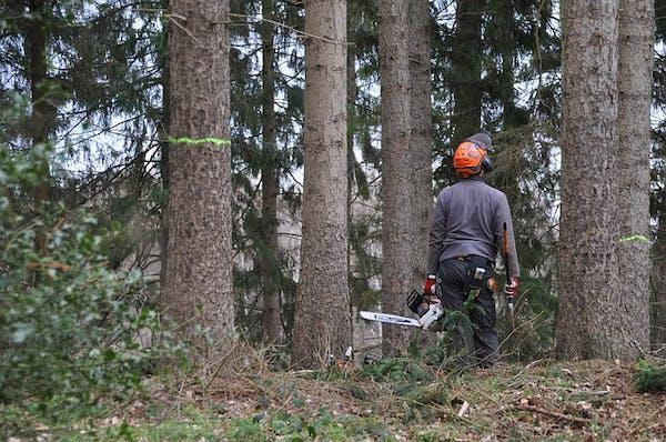 山林伐採業者